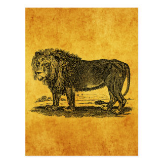 Vintage Lion Illustration - 1800's African Animal Postcard
