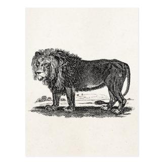 Vintage Lion Illustration -1800's African Animal Postcard