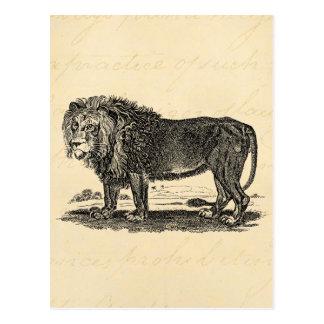 Vintage Lion Illustration -1800's African Animal Postcards
