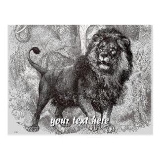 Vintage Lion Post Card