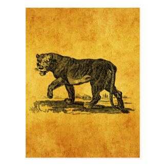 Vintage Lioness Illustration - 1800's Lion African Postcard