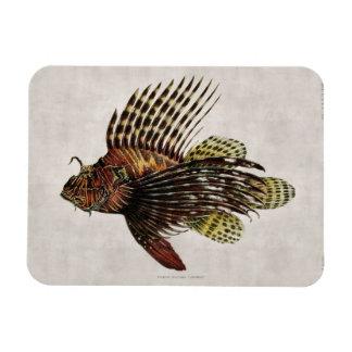 Vintage Lionfish Magnets