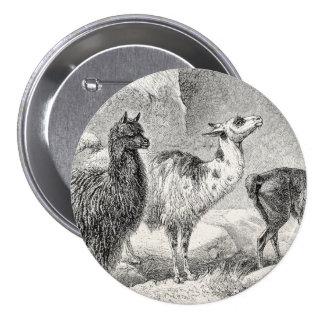 Vintage Llama Alpaca Template Llamas Alpacas Pinback Button