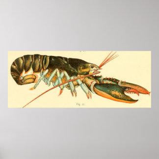 Vintage Lobster Illustration (1895) Poster