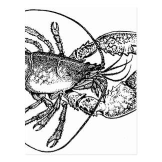 Vintage Lobster illustration Postcard
