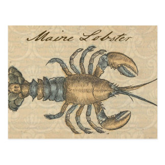 Vintage Lobster illustration Postcard