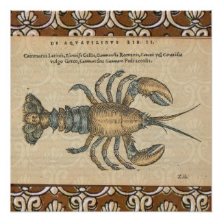 Vintage Lobster illustration Poster