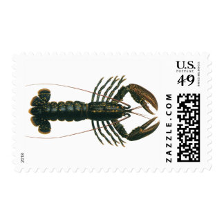 Vintage Lobster, Marine Ocean Life Crustacean Postage