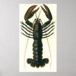 Vintage Lobster, Marine Ocean Life Crustacean Poster