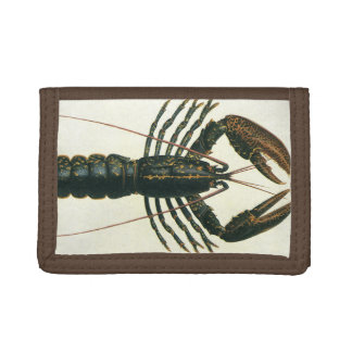 Vintage Lobster, Marine Ocean Life Crustacean Trifold Wallet