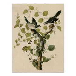 Matte Poster with Audubon's Loggerhead Shrike design