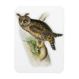 Vintage long eared owl asio otus magnet