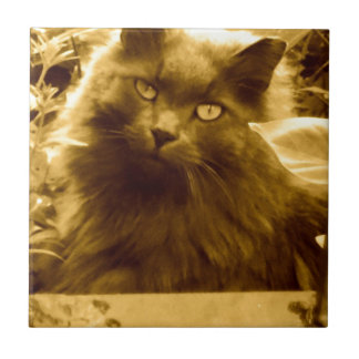 Vintage Long Haired Russian Blue Cat Small Square Tile