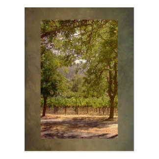 Vintage Look California Vineyard Landscape Postcard