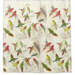 vintage, birds, lorikeets, parrots, wildlife,