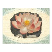 Vintage Lotus Damask Elegant Antique Botanical Postcard