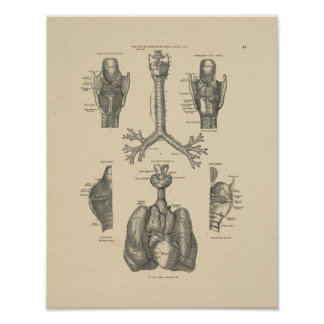 Vintage Lung Heart Anatomy 1880 Print