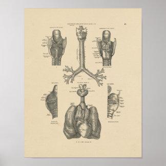 Vintage Lung Heart Anatomy 1880 Print