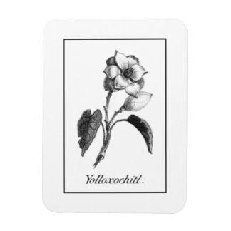 Vintage magnolia flower etching magnet