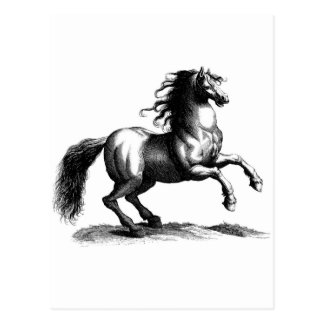 Vintage Majestic Horse Engraving Postcard
