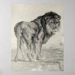Vintage Majestic Lion Poster