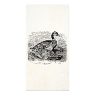 Vintage Mallard Duck Bird - Ducks Birds Template