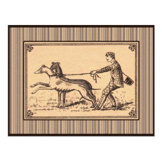 Vintage Man Walking Greyhounds Print Postcard