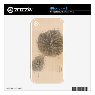 Vintage Map of Tahiti (1845) Skin For The iPhone 4