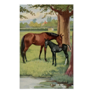 Vintage Mare Colt Filly Horse Equestrian Image Poster