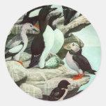 Vintage Marine Animal Life, Aquatic Birds Puffins Classic Round Sticker