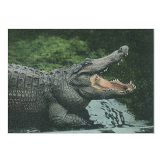 Vintage Marine Animal Life Reptiles, Crocodile Card