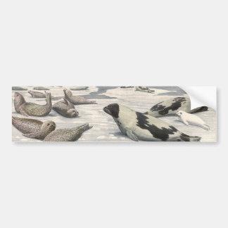 Vintage Marine Animals, Harp Seals in Arctic Snow Bumper Sticker