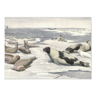Vintage Marine Animals, Harp Seals in Arctic Snow Card