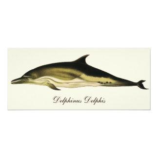 Vintage Marine Animals, Mammals, Dolphins 4x9.25 Paper Invitation Card