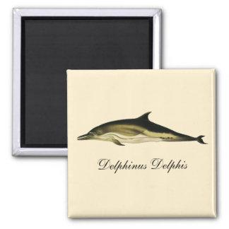 Vintage Marine Animals, Mammals, Dolphins 2 Inch Square Magnet