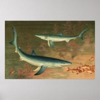 Vintage Marine Aquatic Life Blue Shark Eating Fish Print