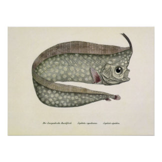 Vintage Marine Aquatic Life, Crested Oarfish, Fish Poster