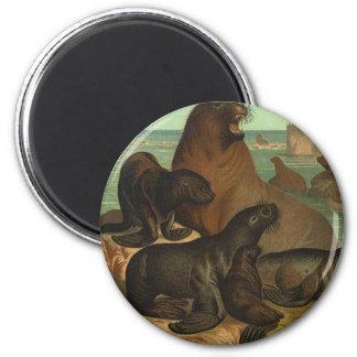 Vintage Marine Life Animal, Sea Lions on the Beach Magnet