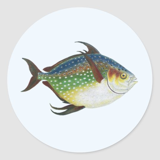 Vintage marine life animal tropical opah fish stickers for Opah fish price