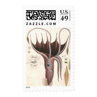 Vintage Marine Life Animal, Umbrella Squid Postage Stamp