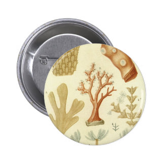 Vintage Marine Life Animals Coral Textbook Biology Pinback Buttons