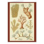 Vintage Marine Life Animals Coral Textbook Biology Cards