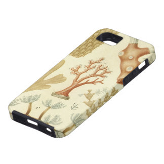 Vintage Marine Life Animals Coral Textbook Biology iPhone 5 Cases
