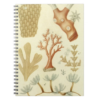 Vintage Marine Life Animals Coral Textbook Biology Note Books
