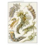 Vintage Marine Life Animals, Snails and Sea Slugs Greeting Card