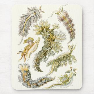 Vintage Marine Life Animals, Snails and Sea Slugs Mouse Pad