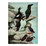 Vintage Marine Life, Aquatic Birds Print