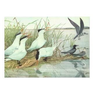 Vintage Marine Life Birds Shorebirds in a Marsh Custom Invites