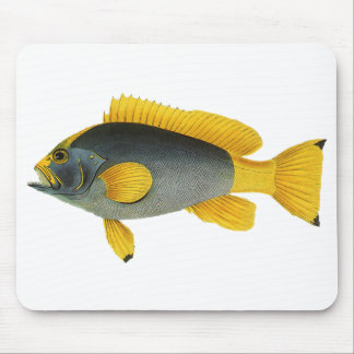 Vintage Marine Life Fish, Blue and Yellow Grouper Mouse Pad