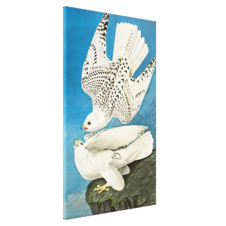 Vintage Marine Life, Gryfalcons, Falcon Birds Gallery Wrap Canvas